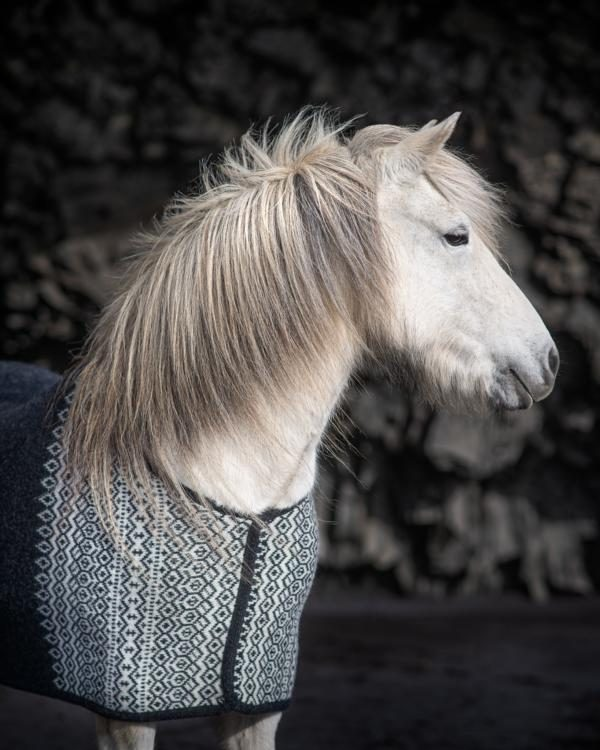 Sweat blankets Icelandic Wool, Saddlepads Icelandic Wool, Saddlecover Icelandic Wool, Dogpad Icelandic Wool and many more. Lots of animal products from Icelandic Wool. Natural material is the best for animals. All the prodcuts are washable and made in Iceland